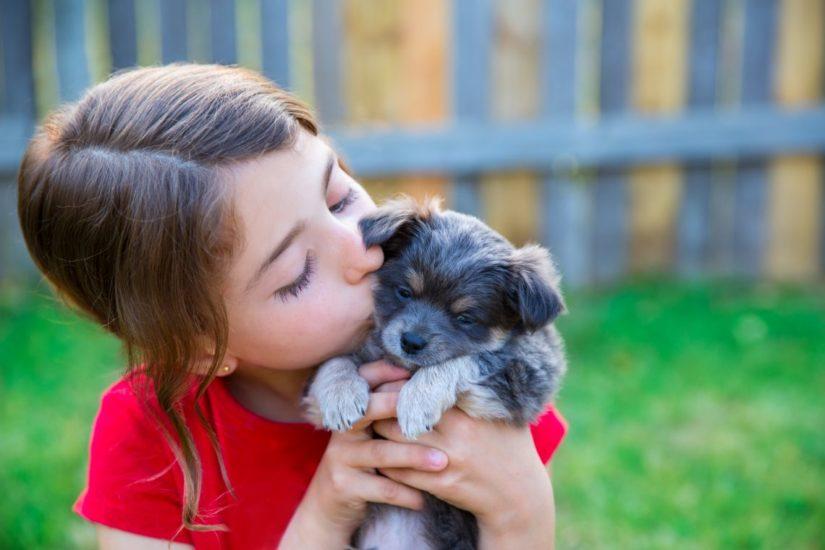 заражение парвовирусом от собаки