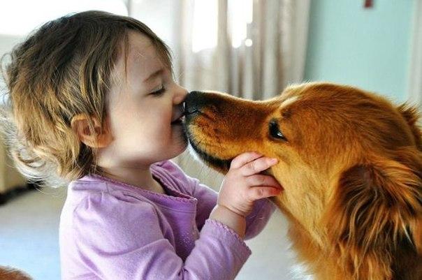 кандидоз у собак