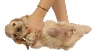 причины и методы лечения грыж у собак