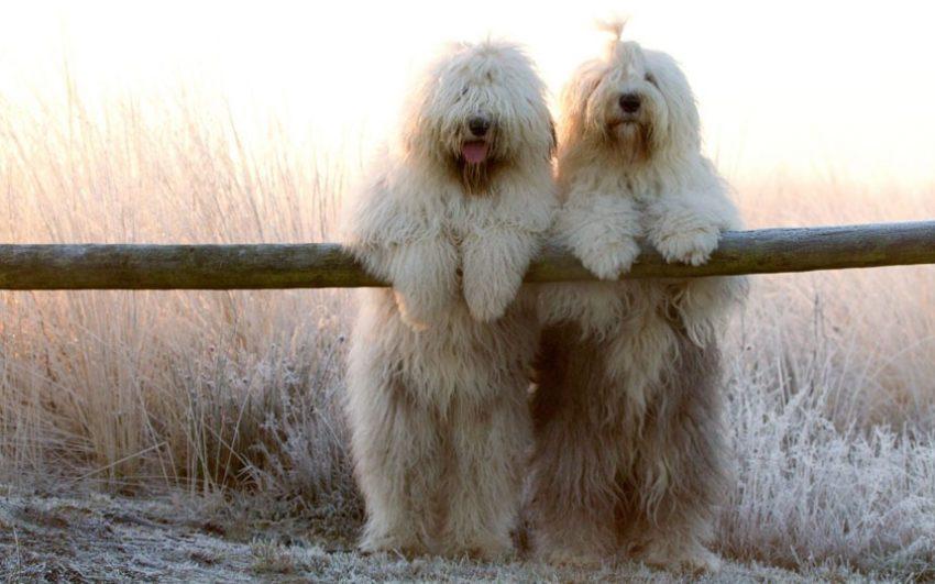 причины неприятного запаха от собаки