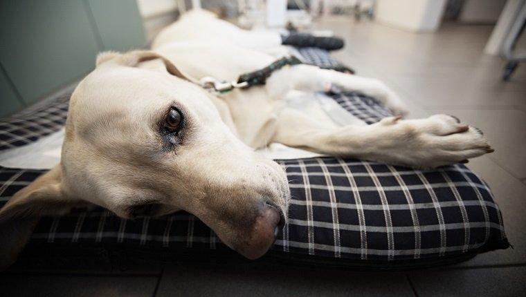 лечение инсульта у собаки