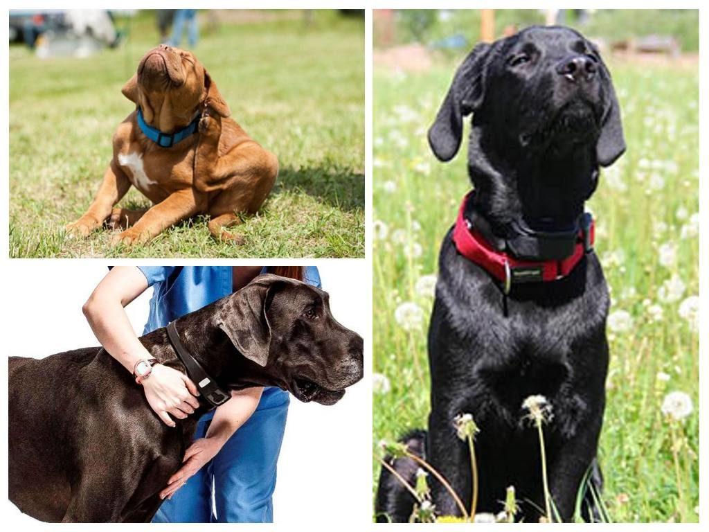 средства от блох для собак