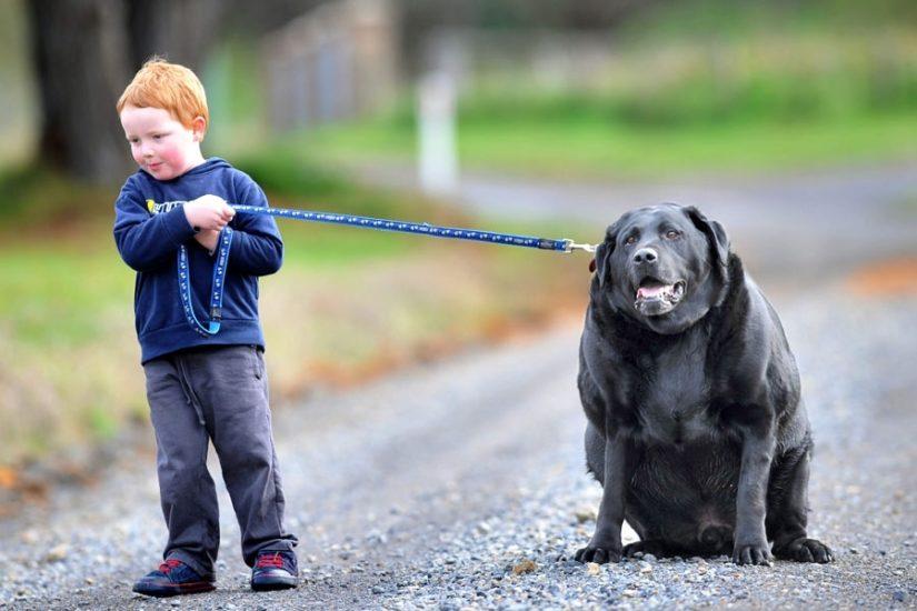причины инсульта у собак