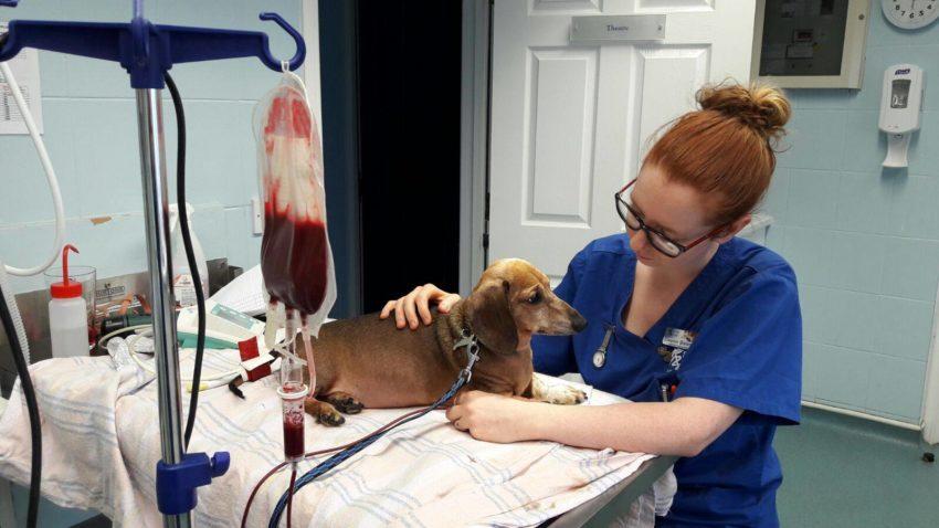 лечение остеомиелита у собак