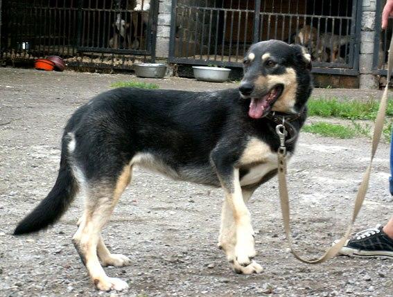 признаки перелома лапы у собак