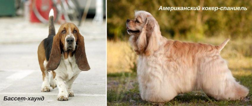 причины плохого запаха от собаки