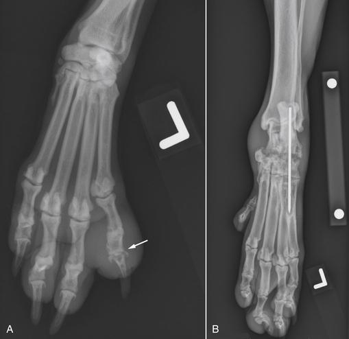 диагностика остеомиелита у собак