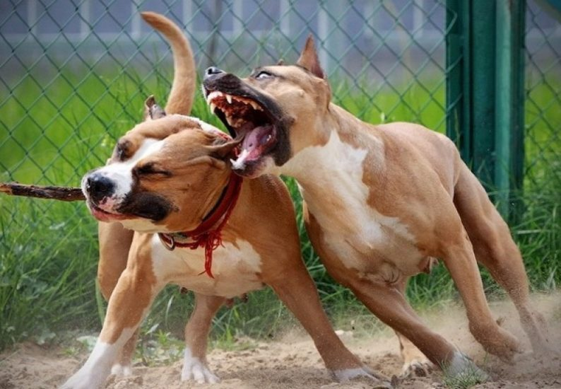 виды ран у собак