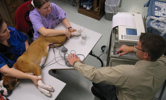 диагностика инфаркта у собаки