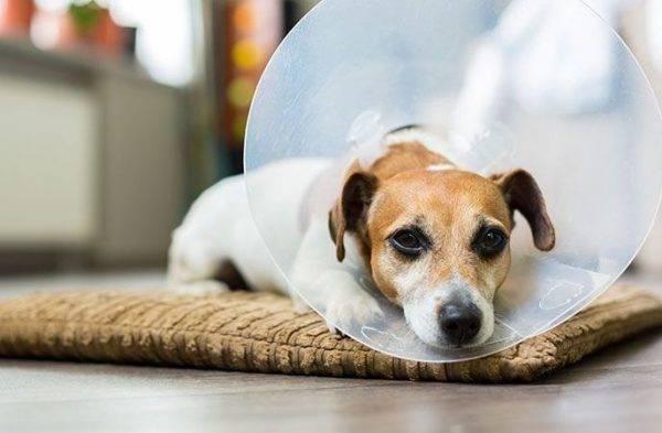 лечение лишая у собак