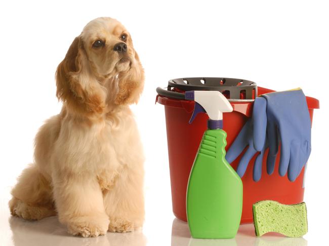 борьба с неприятными запахами от собак