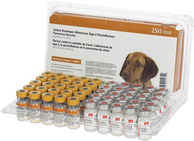 профилактика энтеровируса у собак