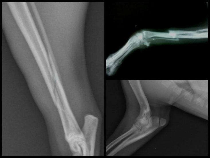 диагностика перелома у собак