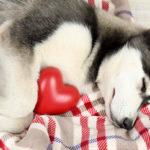 лечение сердечной патологии у собак
