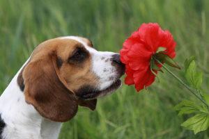 причины аллергии у собаку