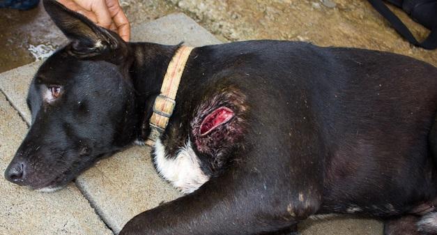 очищение раны у собаки