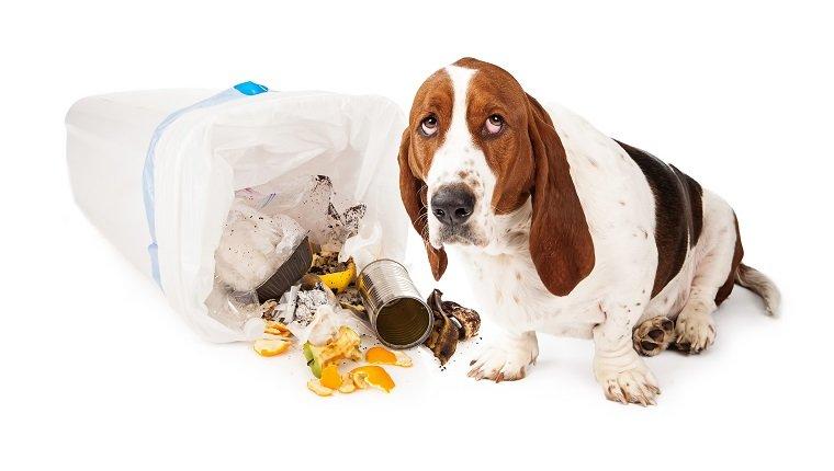 причины и лечение колита у животных