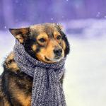 лечение ларингита у собак