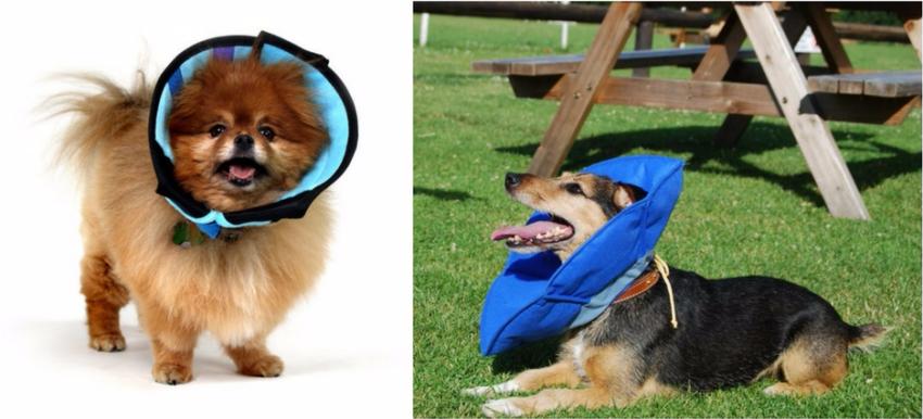 воротники для собак