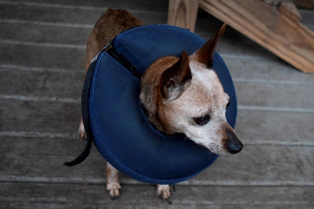 виды защитных воротников для собак