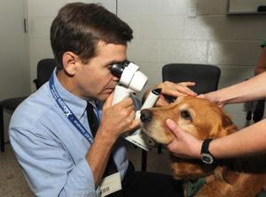 диагностика черепно-мозговой травмы у собак