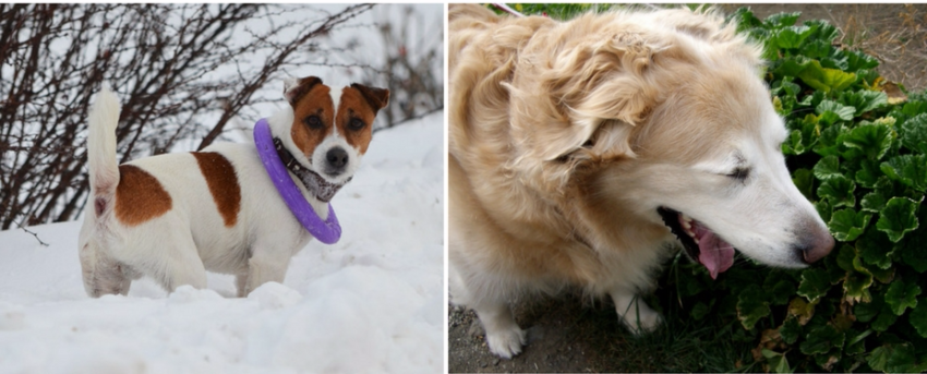 причины насморка у собак