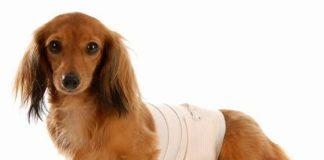 лечение перитонита у собак