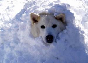 причины бронхита у собак