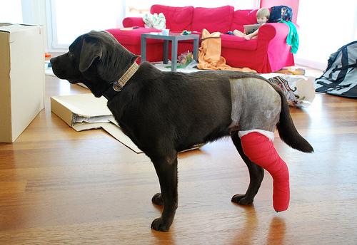 разрыв связок у собаки