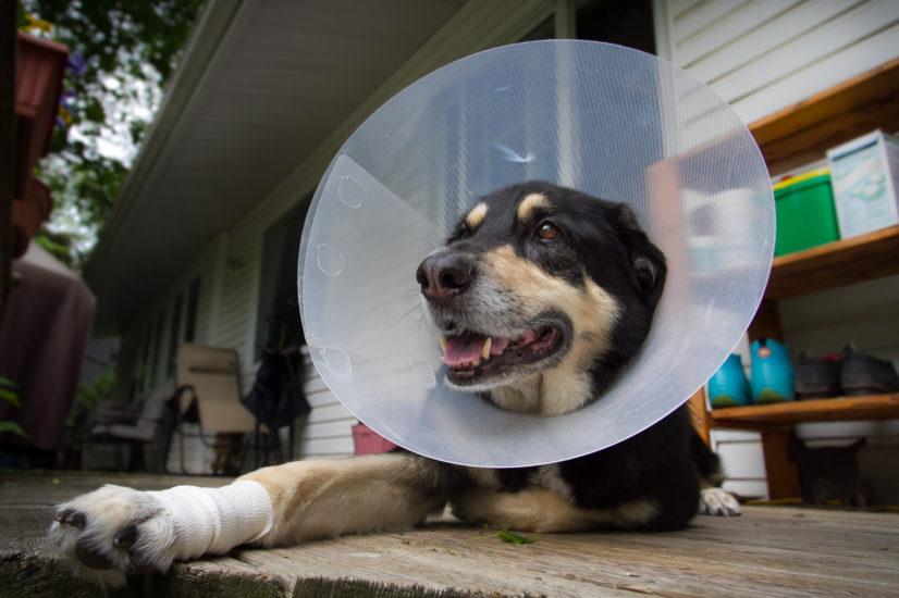 защитные воротники для собак
