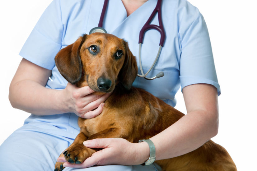 лечение заболевания почек у собак