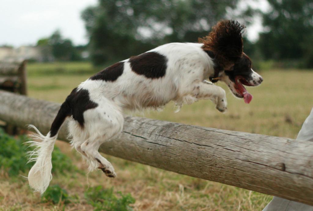 причины разрыва связок у собак