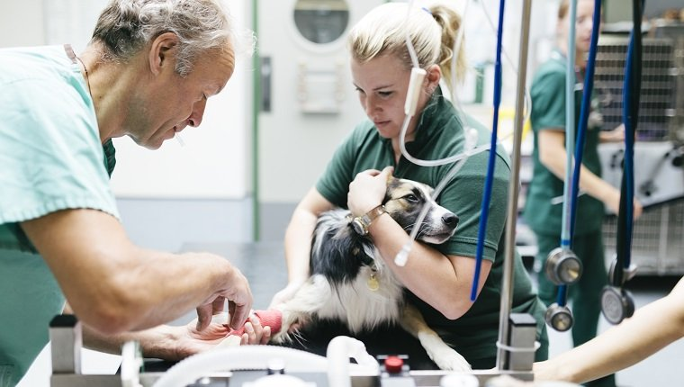 лечение у собак черепно-мозговой травмы