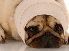 черепно-мозговая травма у собаки