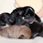 как помочь собаке родить дома