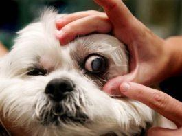 причины и лечение травмы глаз