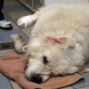 приступ эпилепсии у собак
