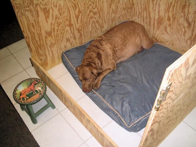 манеж для собаки