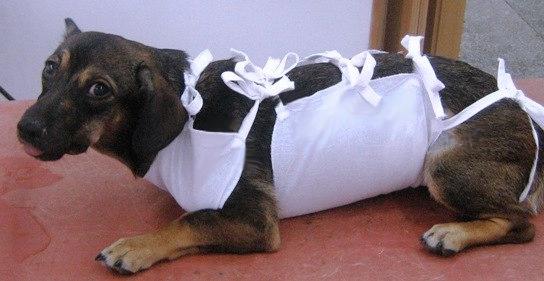 восстановление собаки после аборта
