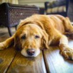 причины и лечение гастрита у собак