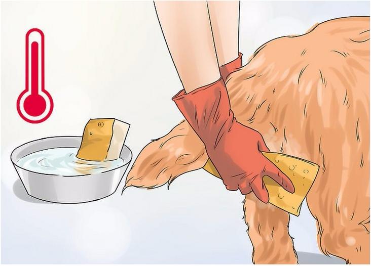 выделения у собаки после родов