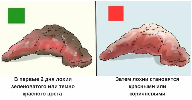 выделения после родов у собак