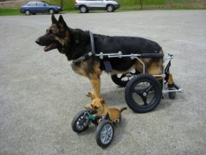 причины паралича лап у собак