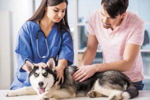симптомы и лечение перелома ребер у собак