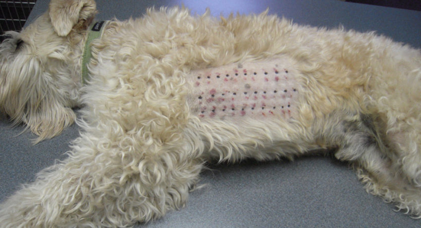 причины и диагностика пищевой аллергии у собак