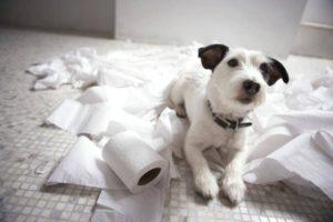 что делать у собаки понос