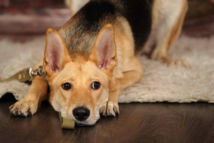 камни у собак в почках