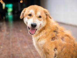 причины алопеции у собаки