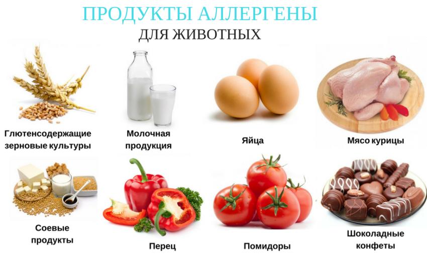 продукты аллергены для животных