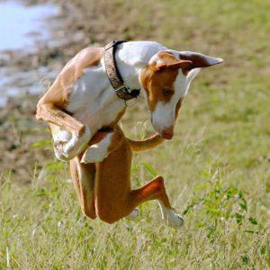 причины переломов ребер у собак